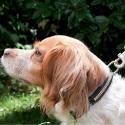 THE RIDER'S DOG